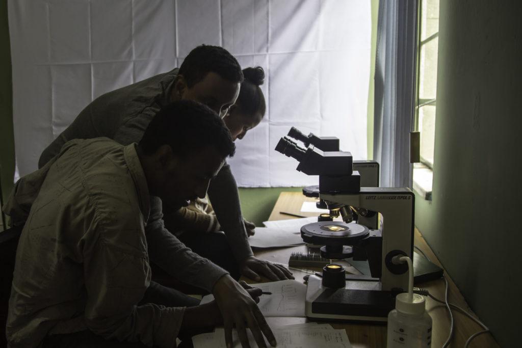 Travail sur microscope