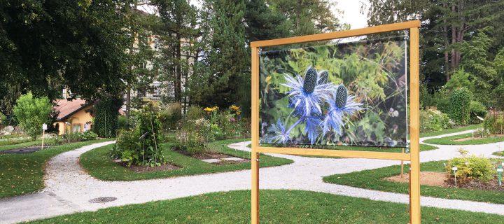 «En Suisse, une plante sur trois risque de disparaître»