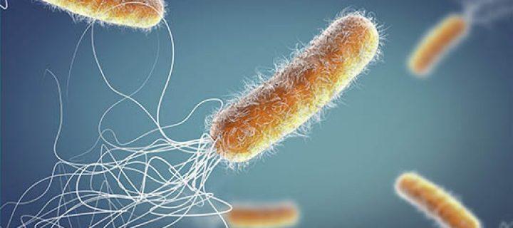Bactéries résistantes: Fribourg au cœur de la lutte