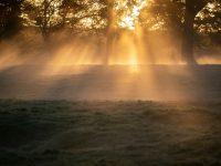 Warum Lichttherapien gegen Depressionen helfen können